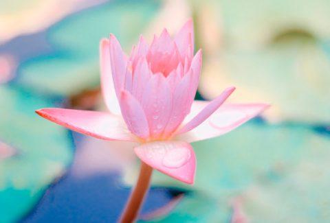 ¿Qué es el despertar espiritual? - Despertar de la conciencia Manelun